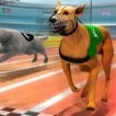 3D Dog Racing Simulator Game Online kiz10