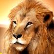 Wild Life Lion